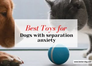 toys for separation anxiety dogs img