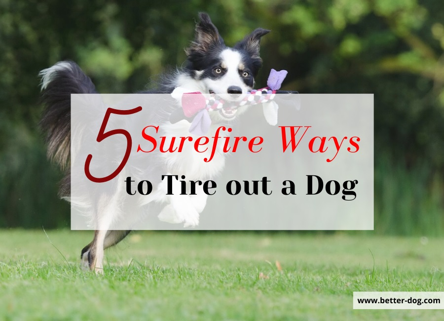 5 ways to tire out dog img
