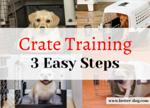 crate training img