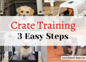 crate training img