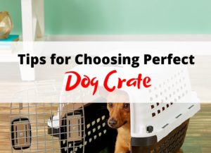 tips for choosing dog crate img